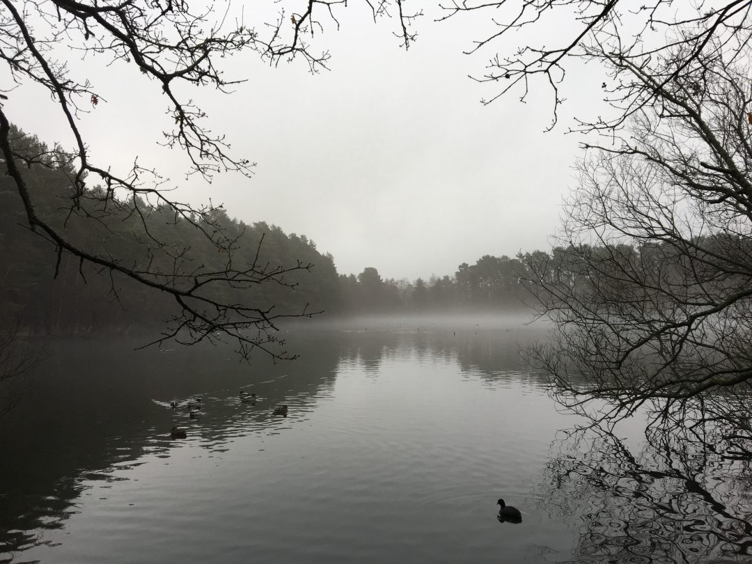 Murky grey day