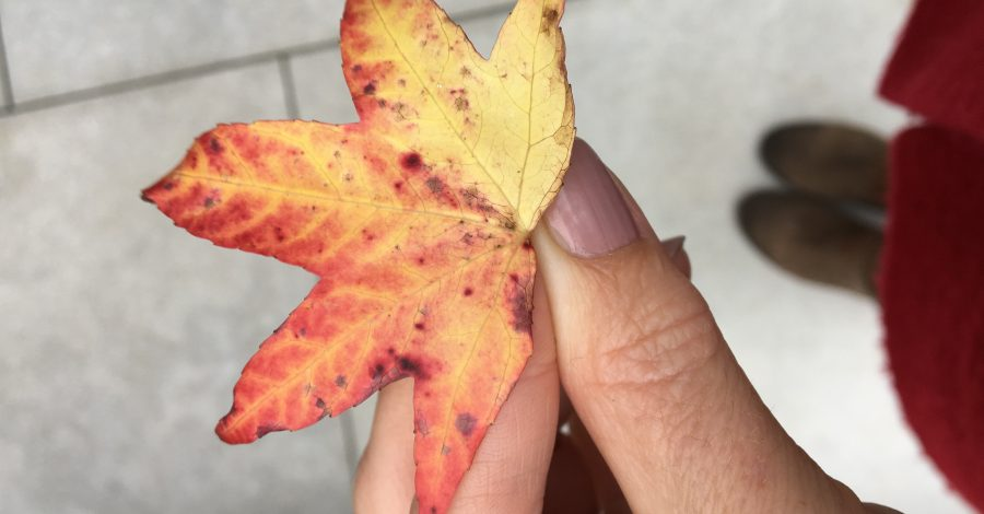 red autumn leaf in hand