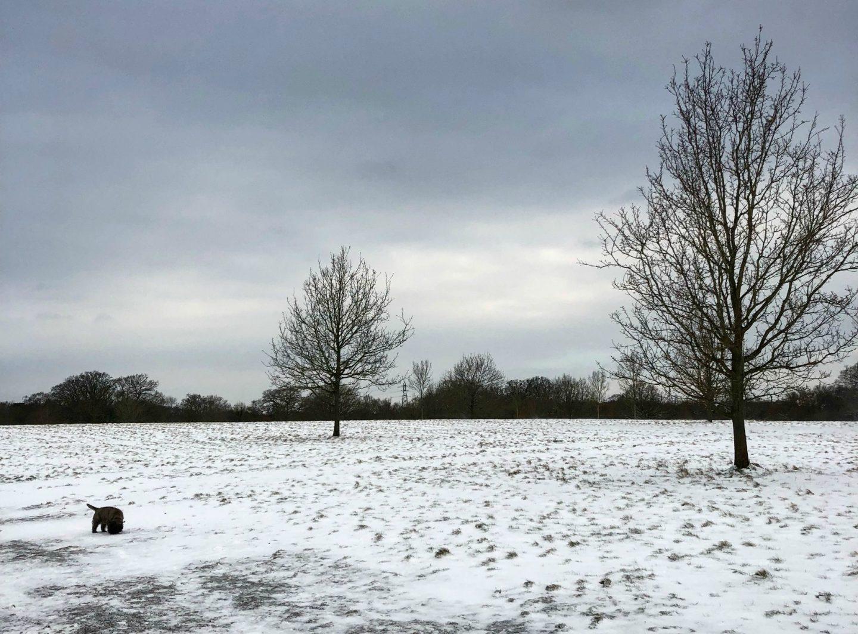 A Little Winter Catch Up