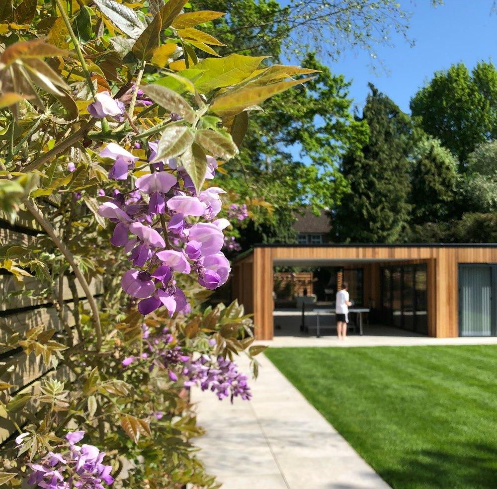 wisteria in a garden