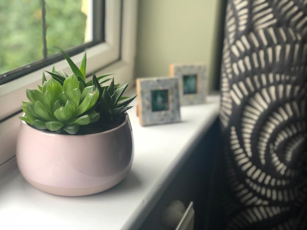 succulents-IKEA-pink-pot