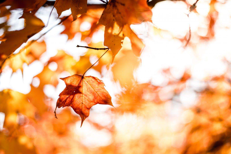 autumn light in trees