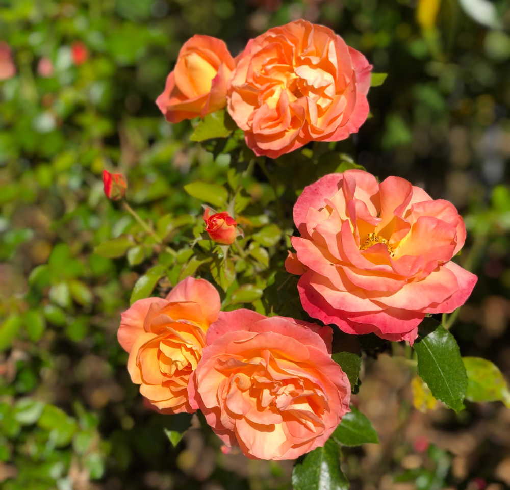 RHS Wisley Flowers