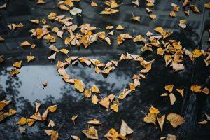 Love heart autumn leaves